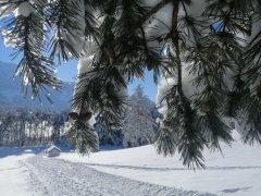 hausthomas-winter-14.jpg